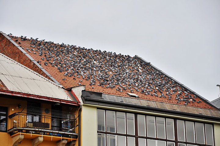 A2B Pest Control are able to install spikes to deter birds from roofs in Wallington.