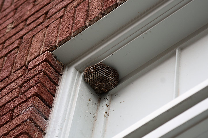We provide a wasp nest removal service for domestic and commercial properties in Wallington.